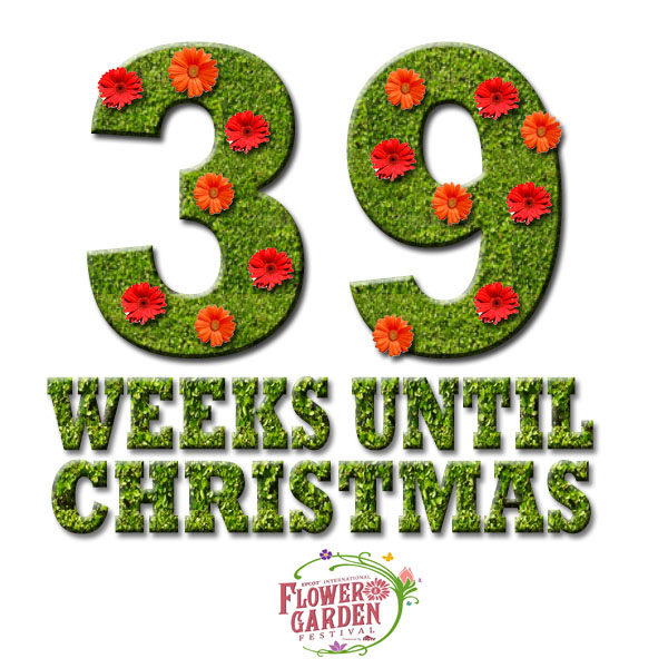 39 weeks until christmas 39 weeks - Weeks Until Christmas